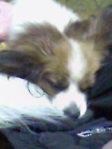 deeply sleep