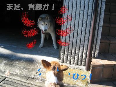 犬神さまとヘタレ犬_s