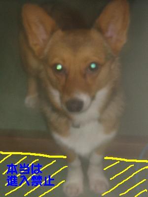がっつき犬_s