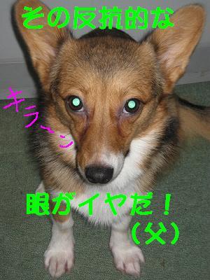 IMG_0902_s.jpg