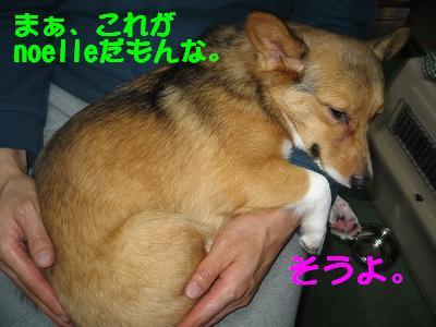 IMG_0977_s.jpg