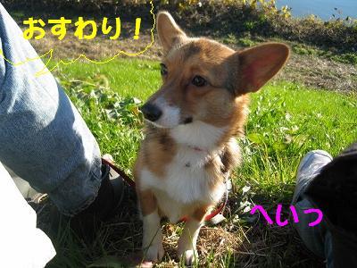 IMG_1020_s.jpg