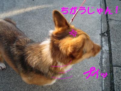 IMG_1077_s.jpg