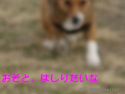 IMG_1257_s.jpg