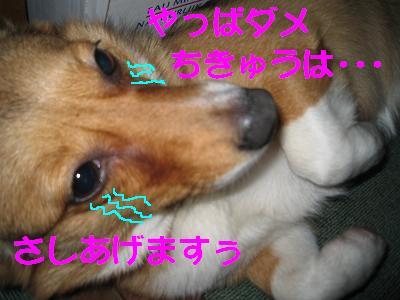 IMG_1601_s.jpg