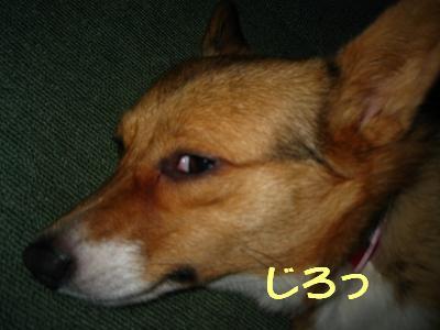 IMG_1997_3_s.jpg