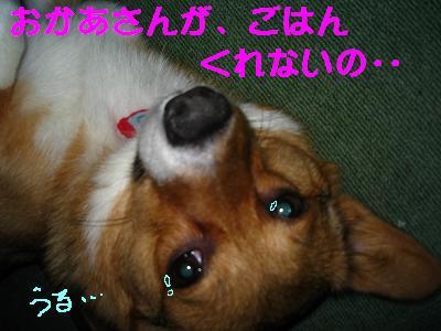 IMG_2011_s.jpg