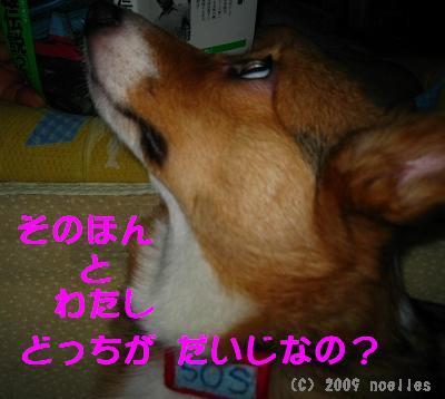 IMG_2228_s.jpg