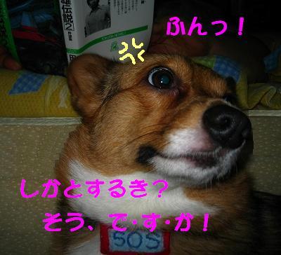 IMG_2229_s.jpg
