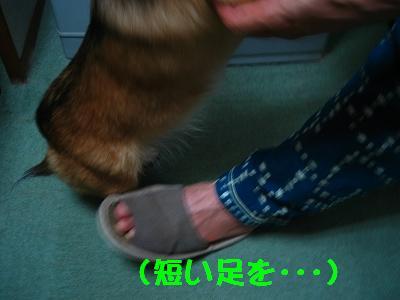 IMG_2902_s.jpg