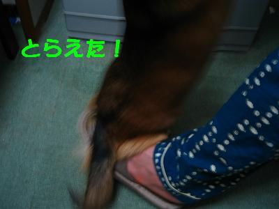 IMG_2903_s.jpg