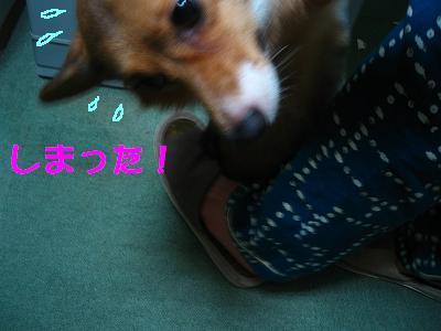IMG_2905_s.jpg