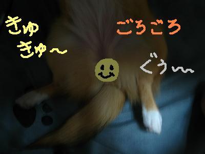 IMG_2998_s2.jpg
