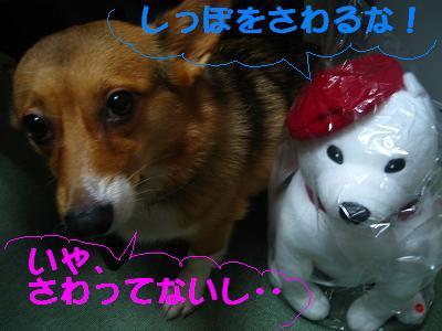 IMG_3519_s2.jpg