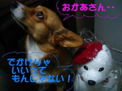 IMG_3523_s2.jpg