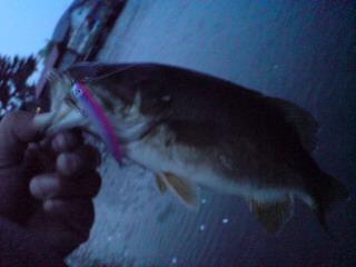 20080501 野尻湖初フィッシュ