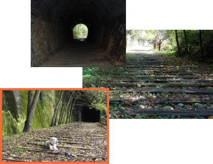 2008・10・26武田尾2