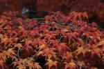 2008・11・24多田神社2