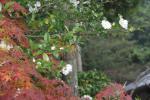 2008・11・24多田神社3