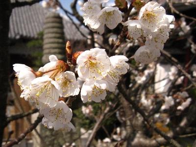 2009・03・12お墓参り1