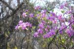甲山巡り花1