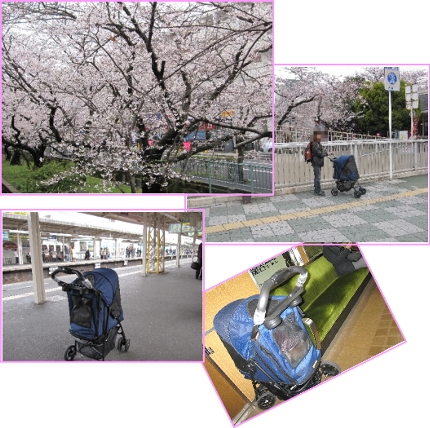 2009・04・05夙川1