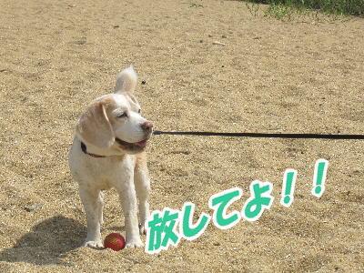 2009・05・31浜ボール1