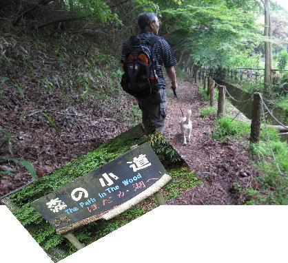 2009・06・14森の小道