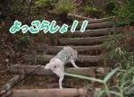 2016・06・04北山植物園7