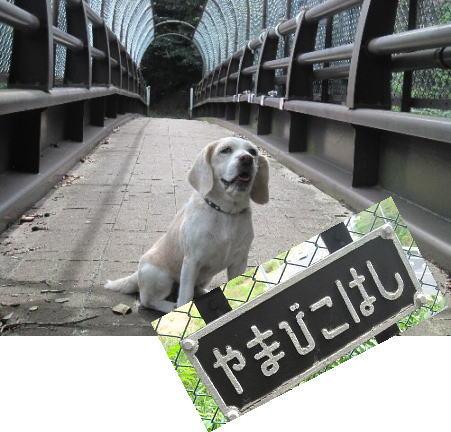 2011・09・18ひよどり公園3