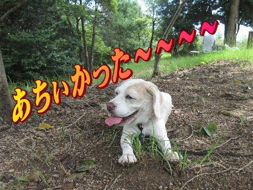 2011・09・18ひよどり公園9