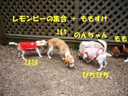 2009・05・24レモン1