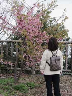 四浦展望台の桜2