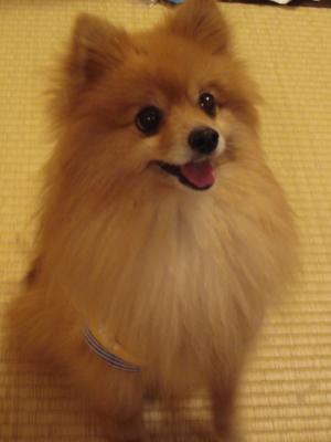 2008.6.21  ちょこちゃん1