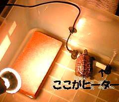 img20061029_2_p.jpg