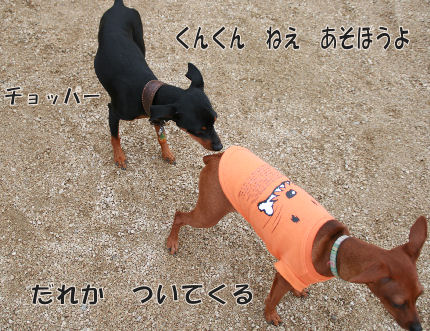 bbq-dog-1