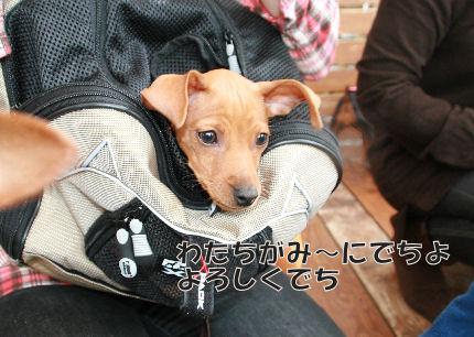 bbq-dog-10.jpg