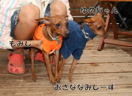 bbq-dog-11.jpg