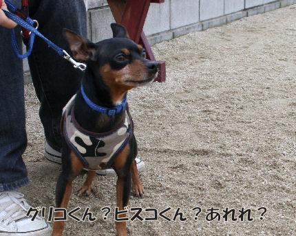 bbq-dog-19.jpg