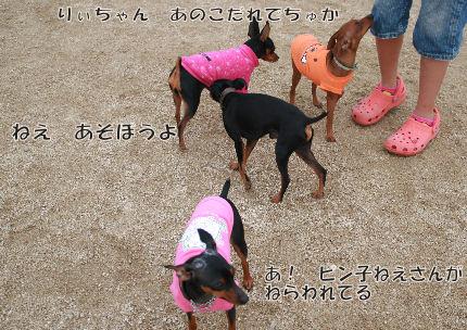 bbq-dog-2.jpg