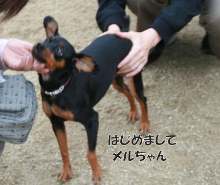 bbq-dog-20.jpg
