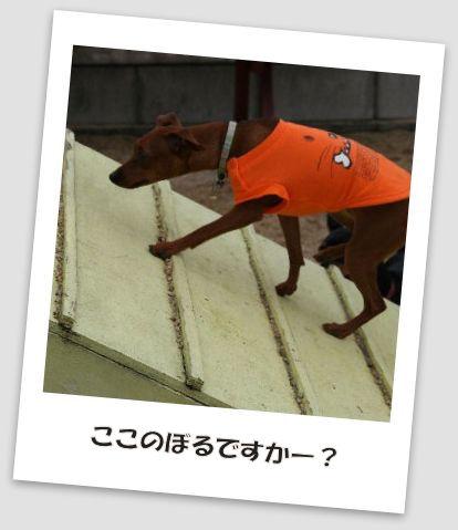 bbq-dog-22.jpg