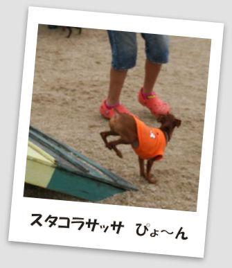 bbq-dog-24.jpg