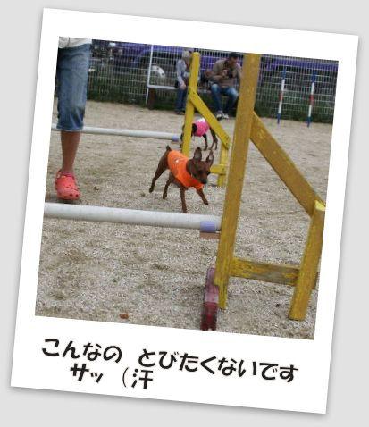 bbq-dog-26.jpg