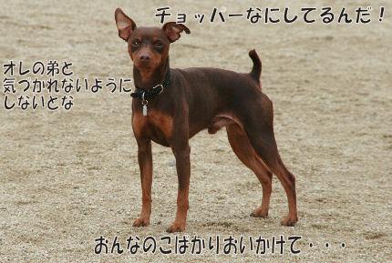 bbq-dog-4.jpg