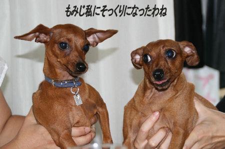 cocoa-momiji1.jpg