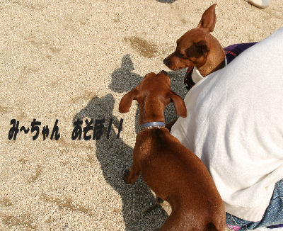dog1-2.jpg
