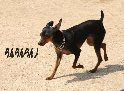 dog1-3.jpg