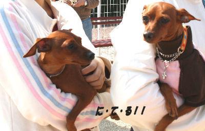 dog1-5.jpg