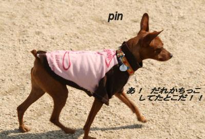 dog1-8.jpg
